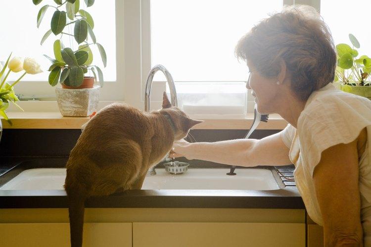 Mujer jugando con un gato.