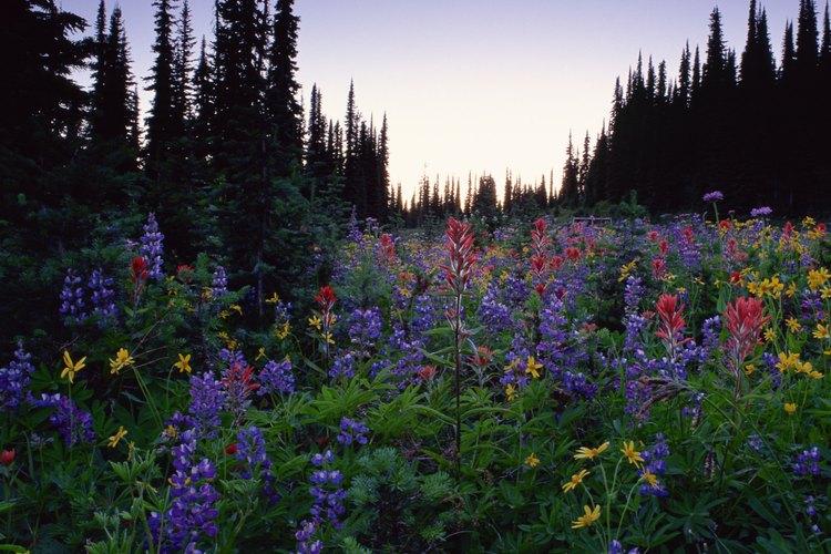 Camina por el bosque cercano para ver las flores silvestres de verano.