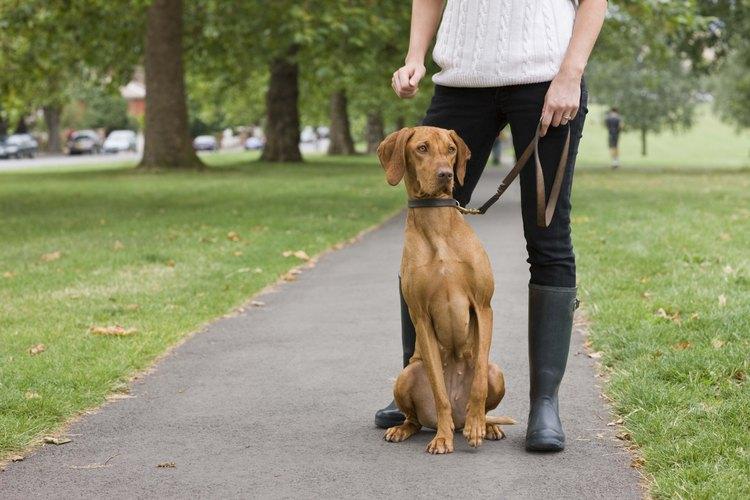 Los humanos pueden contraer la salmonella de los perros.