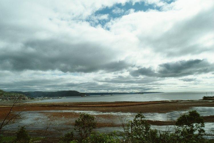 Los pantanos son ecosistemas con su propia flora y fauna.