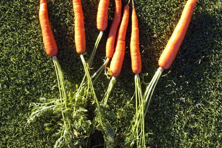 Tu hijo puede ser sorprendido al enterarse de que ya come raíces de plantas, tales como las zanahorias.