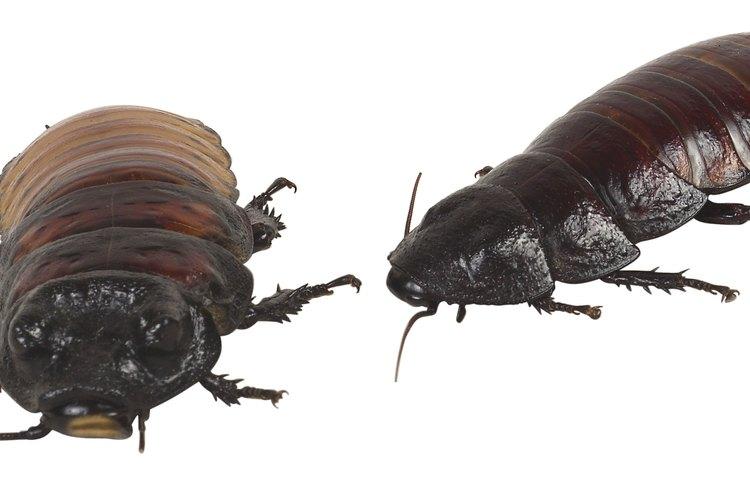 Mantén tu hogar libre de insectos con aceites esenciales puros y naturales.