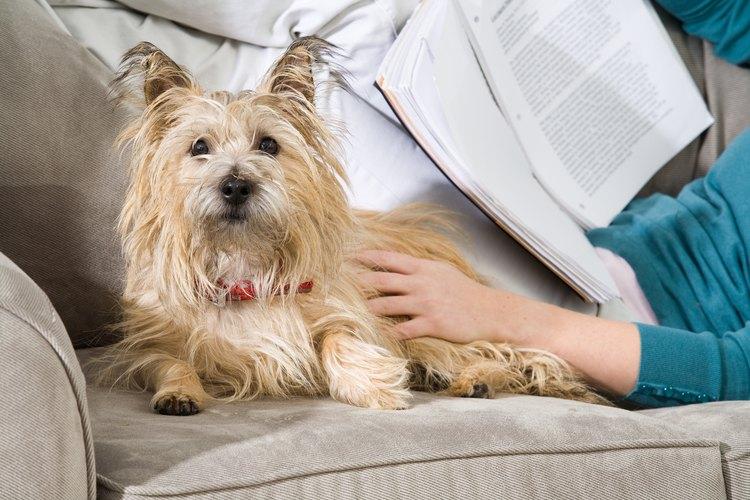 Los sofás hechos con tejidos similares al color de pelo de las mascotas camuflan el pelo.