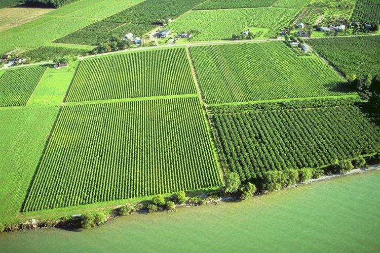 Los productos con certificado USDA organic son vendidos generalmente a precios más elevados que los convencionales, creando un incentivo para que los agricultores se certifiquen.