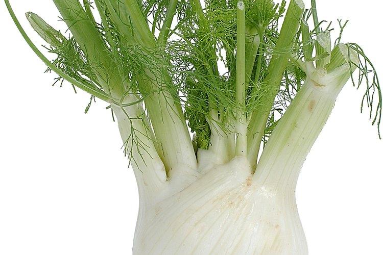 Aunque el bulbo del hinojo es lo que más se usa en las recetas, la planta entera del hinojo es comestible.
