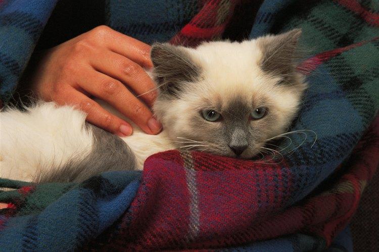 Los pañales de gato mantienen a tu mascota cómoda y seca.