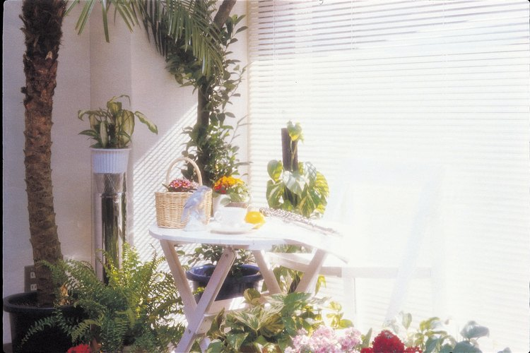 Las plantas de interior crean exuberantes zonas de estar interiores de las que se puede disfrutar todo el año.