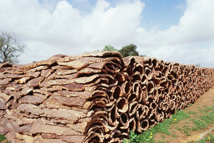 Por muchos años, los trabajadores llamados sacadores de corteza hacían todo el trabajo de cortar los árboles.