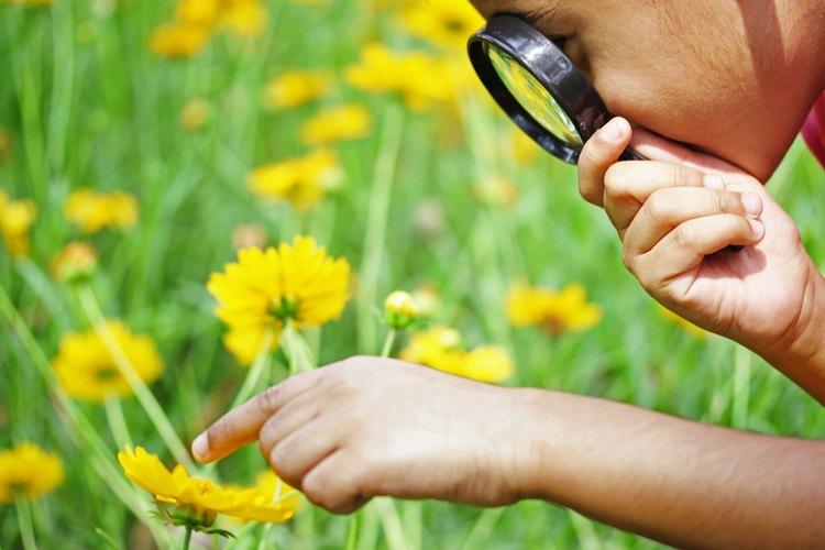 Las exploraciones prácticas proporcionan un contexto real a los niños.