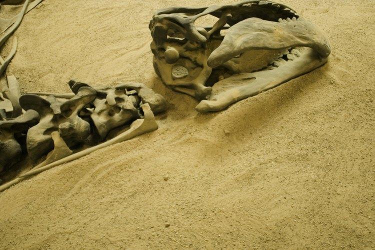 De acuerdo con los fósiles descubiertos, el espinosaurio pesaba 8 toneladas, y medía 16,76 metros de largo.