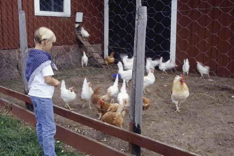 Protege a las aves de los depredadores.