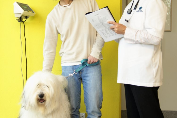 Diseña con tu veterinario un programa de alimentación.