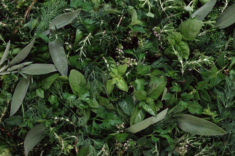 Mantén el suelo húmedo pero drenado para evitar la pudrición de la raíz.