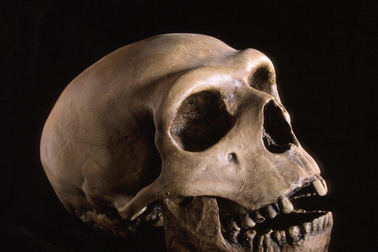 Los neandertales estuvieron listos en el comienzo del período Neolítico.