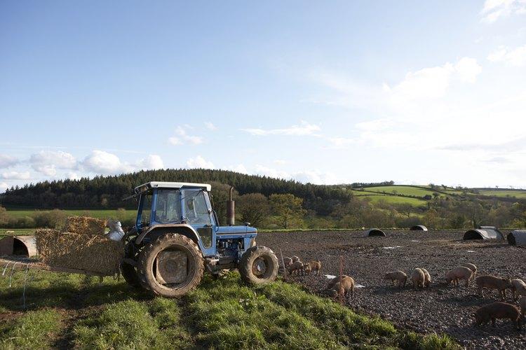 El policultivo puede ahorrar tiempo y dinero al agricultor.