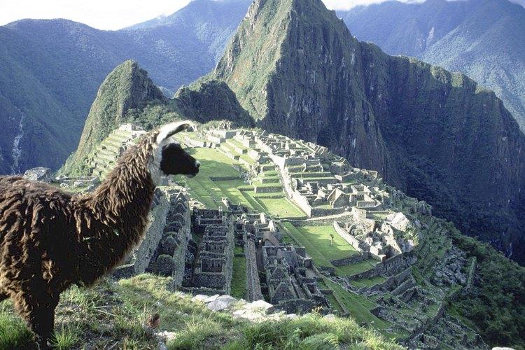 Párate junto a una llama y sorpréndete con la maravilla de Machu Picchu.
