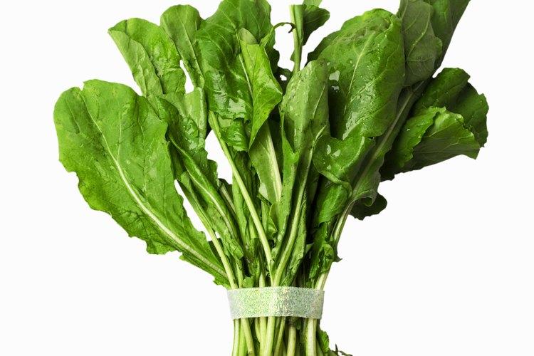 Combina la rúcula con otros vegetales de hojas para obtener una ensalada sabrosa.