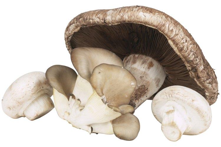 Los hongos deben tener la pulpa de color uniforme.