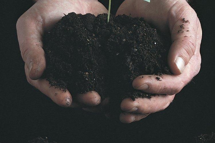 Mira nacer una nueva planta en un germinador hecho de cartón de huevo.