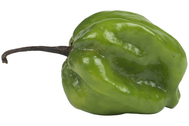 Los chiles poblanos, fáciles de cultivar, le dan sabor a diferentes platos.