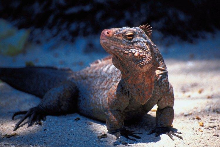 Descubre los tipos de reptiles que hay en tu entorno.