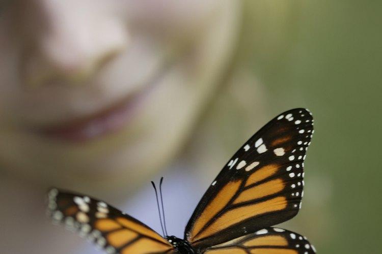 Una visita a un jardín de mariposas anima a los niños a observar mariposas reales en sus hábitats naturales.