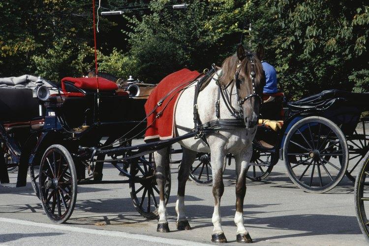 Los planos de carros de caballo deben ser seguidos al pie de la letra para obtener la máxima seguridad tanto para el caballo, como para el conductor.