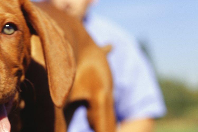 Una catarata se refiere a una opacidad en el cristalino del ojo de un perro, que no permite que el ojo reciba luz.
