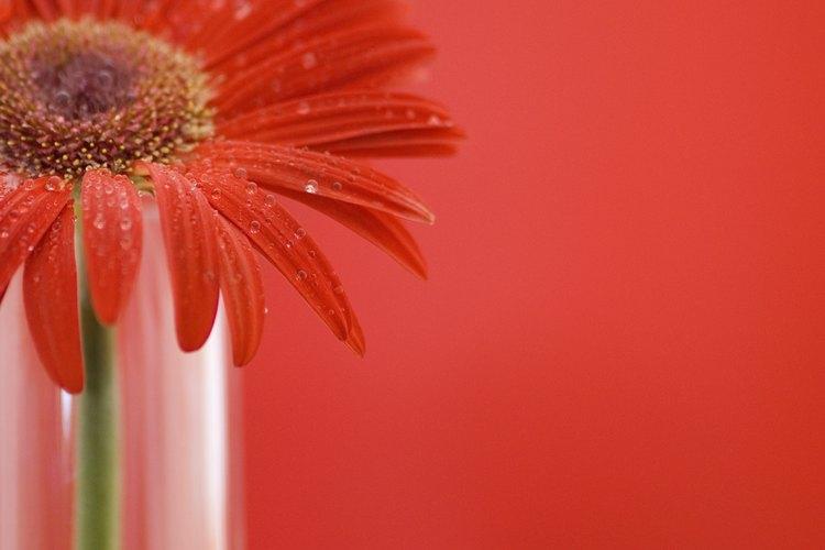 Llena un vaso o un florero con agua templada y añade unas gotas de colorante para alimentos.