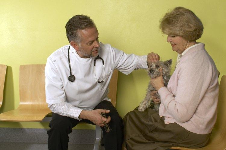 Haz una cita con el veterinario si notas cualquier bulto nuevo en la piel de tu perro.