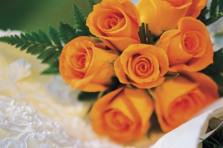 La mayoría de las rosas son originarias de Asia.