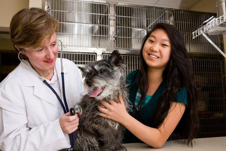 Lleva a tu perro al veterinario.