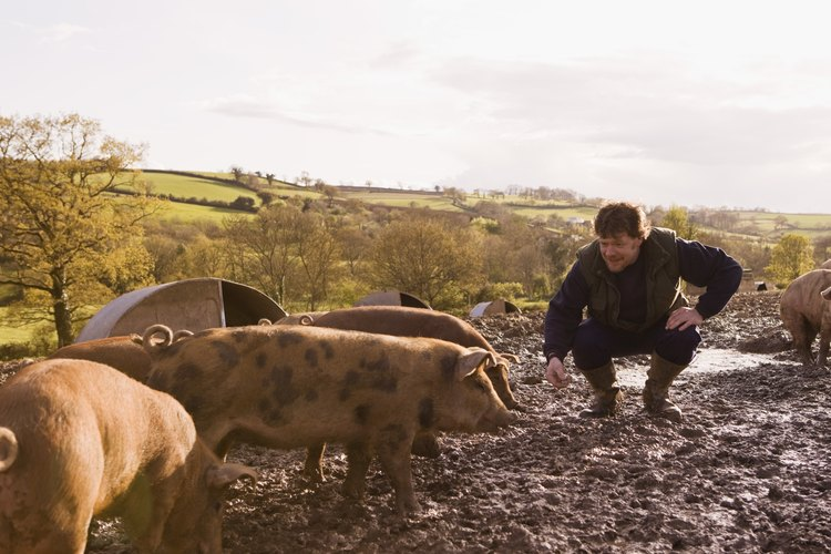Puedes asar un cerdo en tu propio grill hecho en casa, con un tambor de 55 galones (210 L).