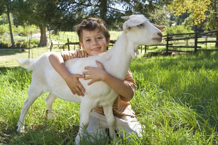 Visitar a una granja puede ayudar a los niños a hacer conexiones con sus comunidades.