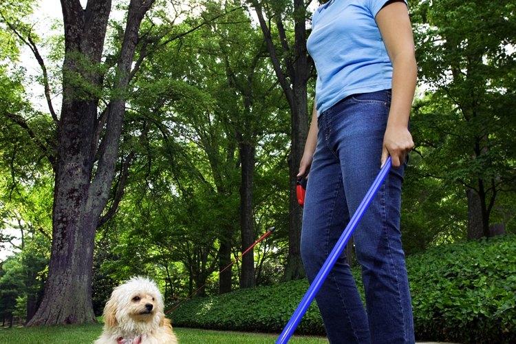 Limpiar las heces es el primer paso para mantener un aroma agradable en el jardín.