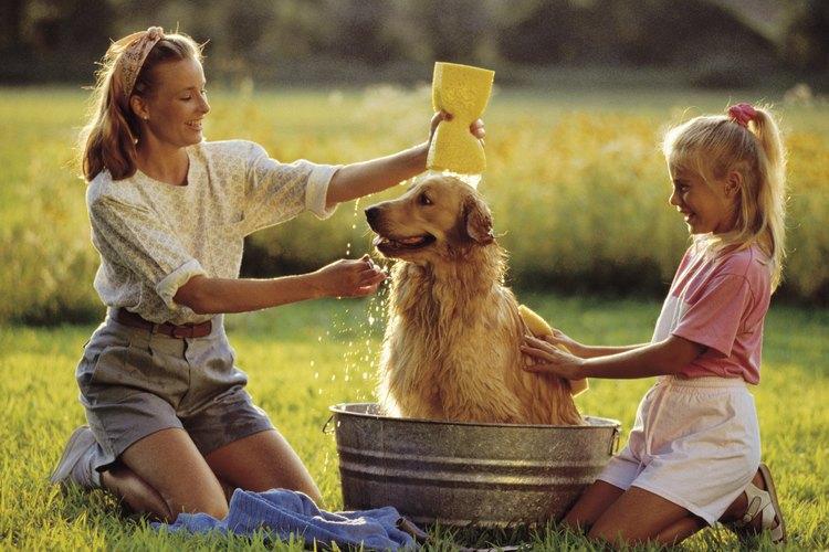 Después de bañar a tu perro, cúbrelo con repelente de mosquitos hecho en casa.