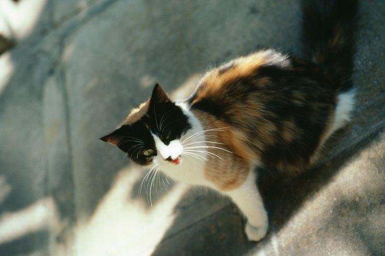 Alimentar a los gatos callejeros los incentiva a quedarse en tu porche.