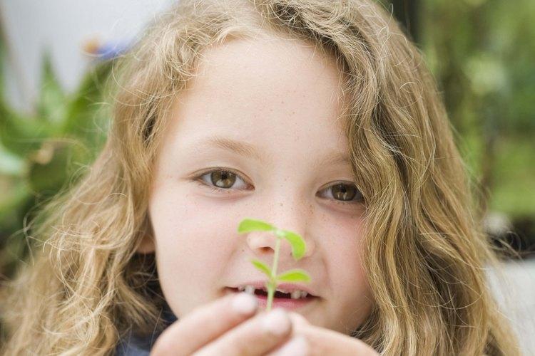 Un invernadero en miniatura es un buen lugar para plantar semillas.