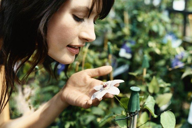 Las plantas necesitan nitrógeno para crecer y llevar a cabo la fotosíntesis.