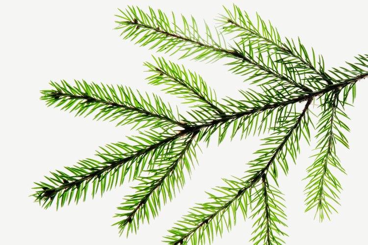 El verde bosque es una color de base versátil para tu decoración.