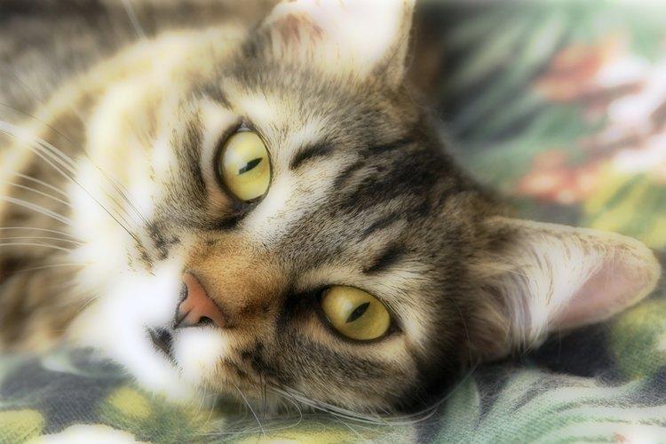 Debes asegurarte de que tu gato está feliz y saludable.