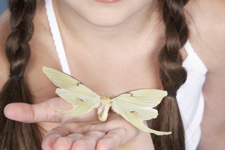 Cuando está terminada, las secciones en bucle de la trenza parecen las alas de una mariposa.