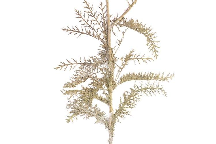 Las plantas resistentes pueden prosperar en los suelos rocosos gracias a la profundidad de sus raíces.