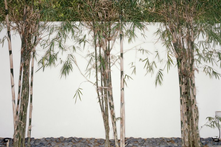 Utiliza concreto para evitar que las raíces se propaguen.