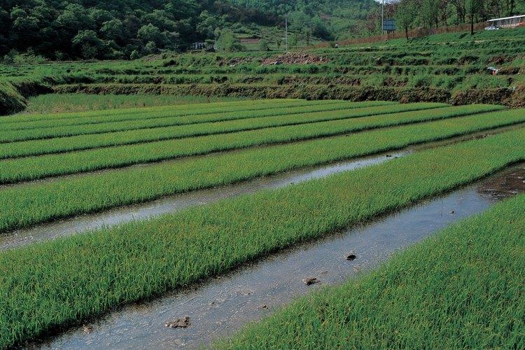 El riego superficial ha sido usado por milenios.