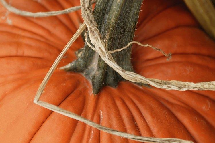 Las calabazas son fáciles de cultivar pero tienen unas necesidades crecientes.