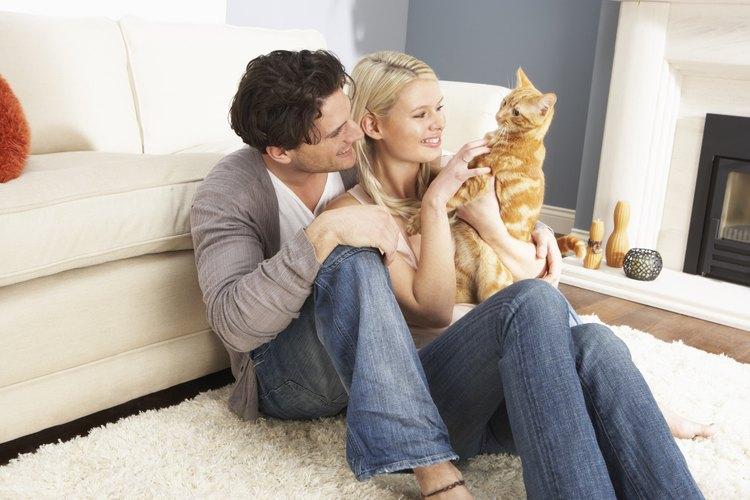 ¿Tu mascota necesita atención médica? Existen maneras de obtenerla sin tener que ir con el veterinario.