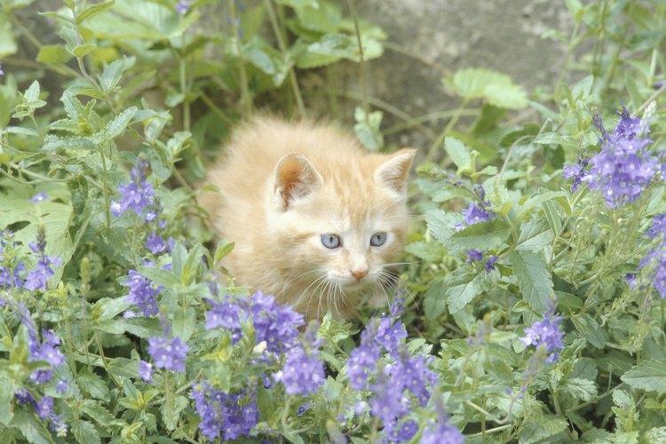 Los gatos detestan el olor de los cítricos.