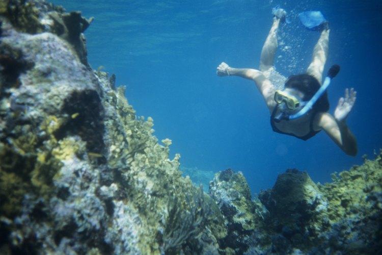 Sumérgete y explora el mundo submarino de Florida.