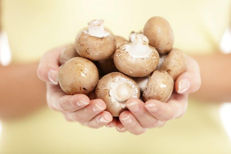 Los hongos deben sentirse secos al tacto.